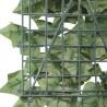 Edera sempreverde siepe decorativa