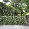 Siepe decorativa Sempreverde Point Edera 1x5mt